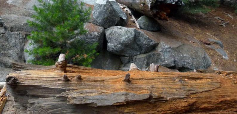 Liste des activités à faire lors de votre visite du parc national de Sequoia en Californie