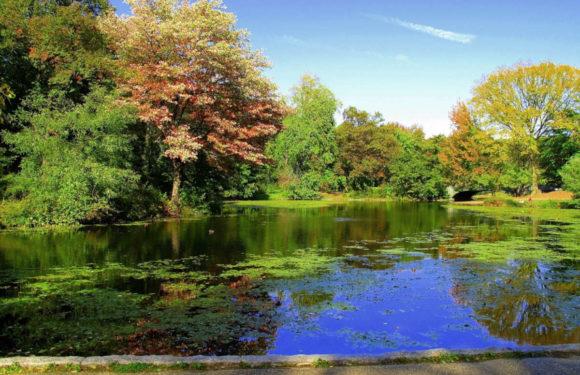 Les 5 parcs incontournables de la ville de New York